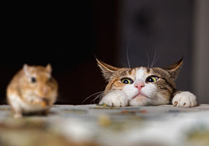 Comment éliminer<br />les souris ?