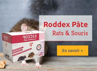 Roddex Pâte