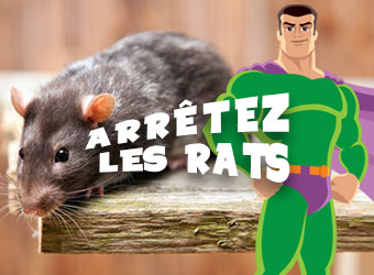 Arrêtez les rats