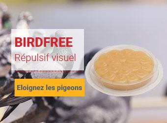 Birdfree