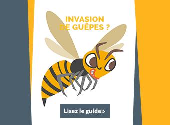 Guide pour détruire un nid de guêpes