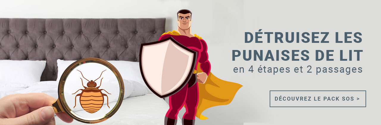 SOS Punaises de lit