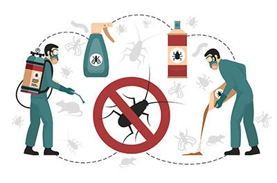 Comment bien utiliser les insecticides ?